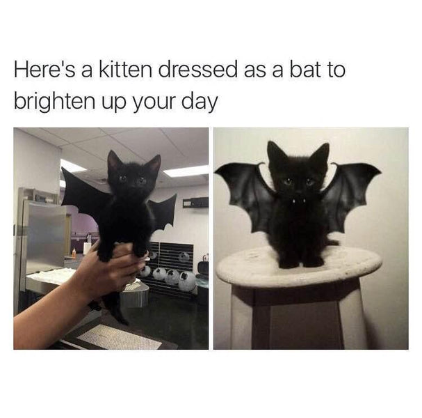 BUY BEAUTY TIPS™ (BUY BEAUTY PRODUCTS ONLINE BLOG) with Beauty Art™:  #BAT DRESSED UP AS A KITTEN #Dannyco Large Heated Eyelash Curler