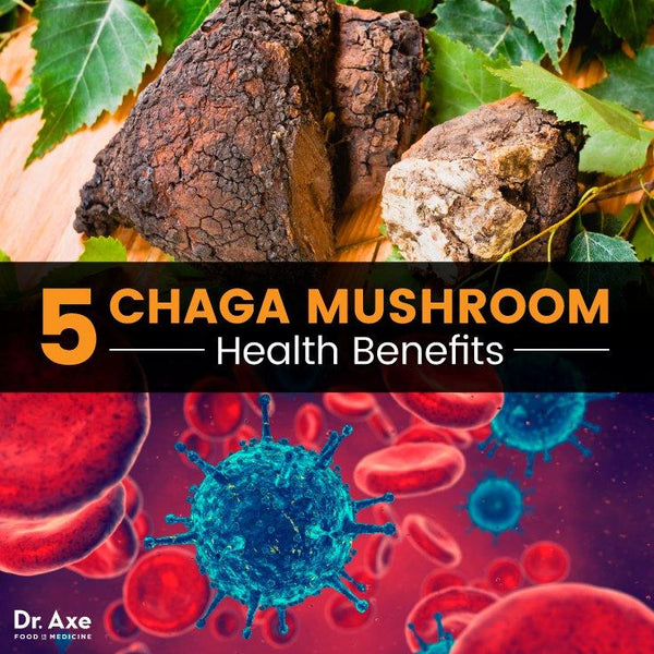Buy Beaut Products answers your questions! BUY CHAGA MUSHROOM ONLINE! Buy beauty products! BUY BEAUTY PRODUCTS Torf Night Cream with Chaga Mushroom Extract
