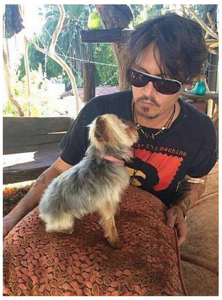 "BUY BEAUTY TIPS™ (BLOG) with Beauty Explained™: Who let Depp's dogs out? Babyliss Hot Air Brush to keep these dogs ""chaud"""