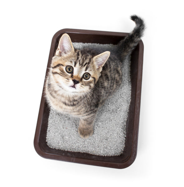 Beauty Price Match | Kitty litter for a detox! #TORF MUD