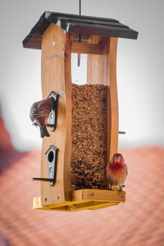 Best bird feeders for moms and parents
