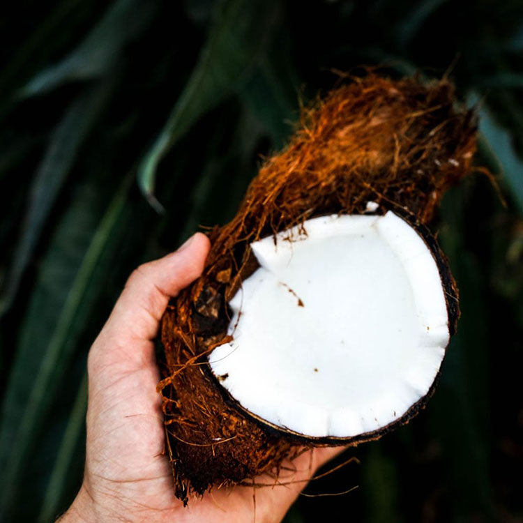 One Ingredient Wonder: Coconut Oil