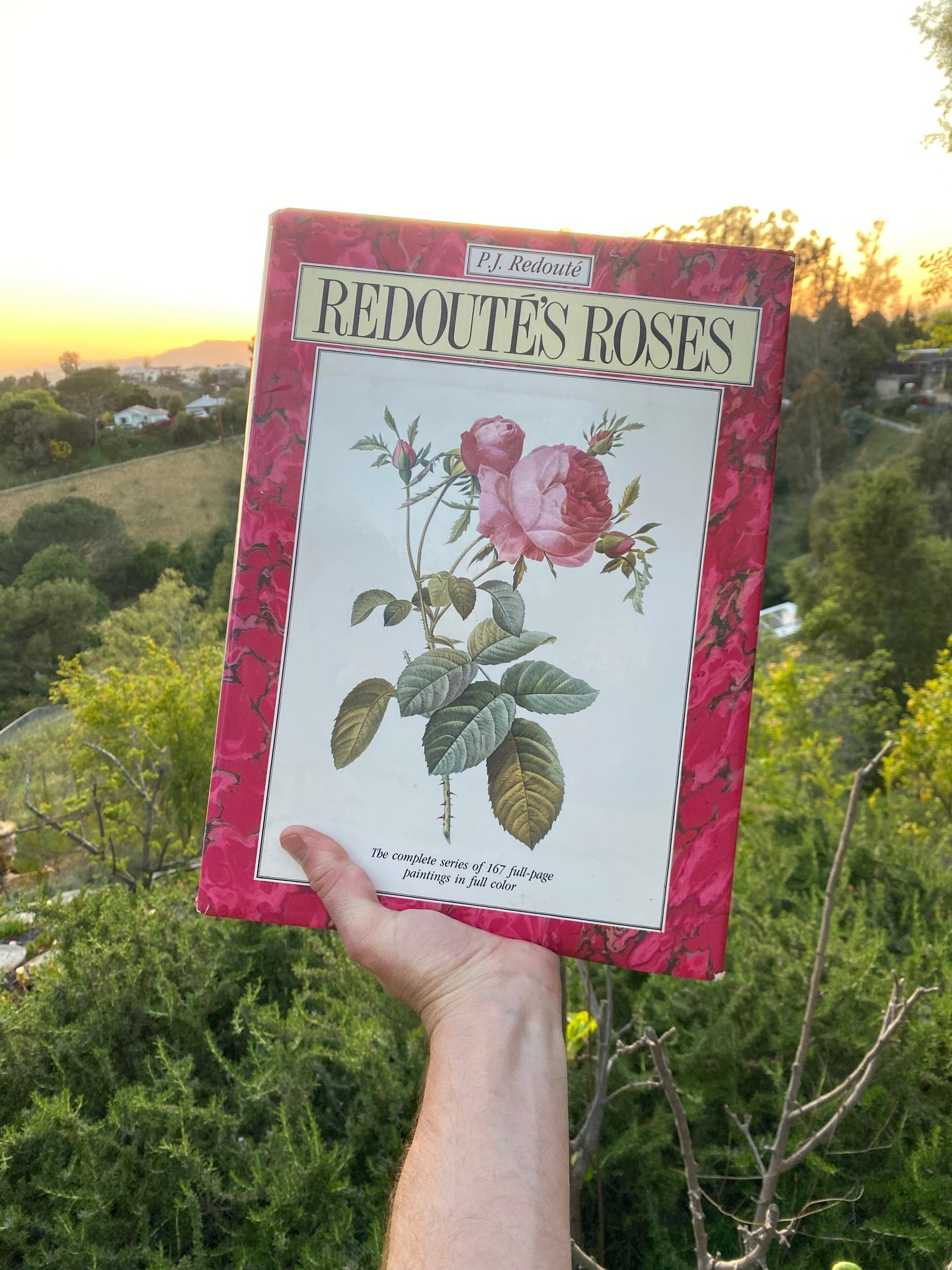 Redoute's Roses - PJ Redoute