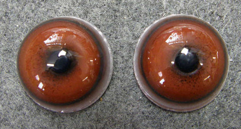 24mm Domestic Dog Eyes in Brown - Concave/Convex