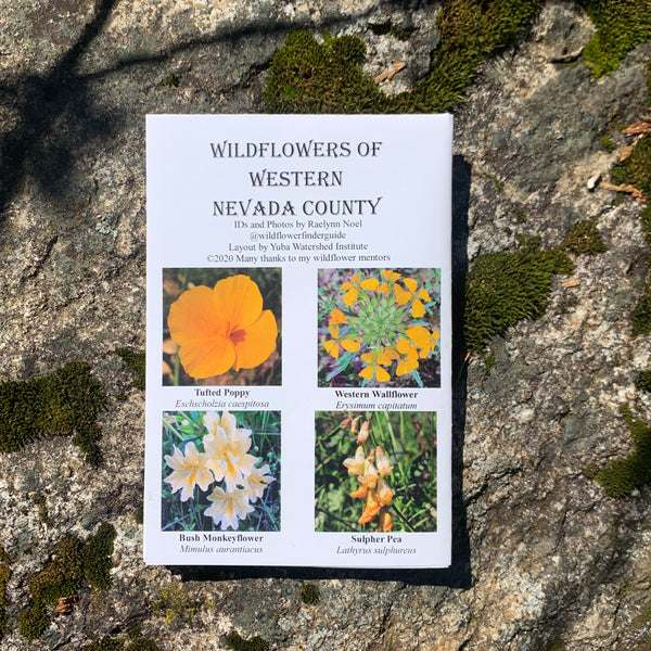 WILDFLOWERS OF WESTERN NEVADA COUNTY