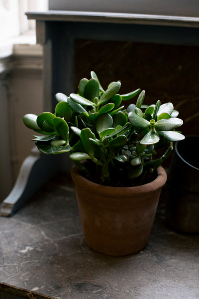 Indoor Houseplants Ireland