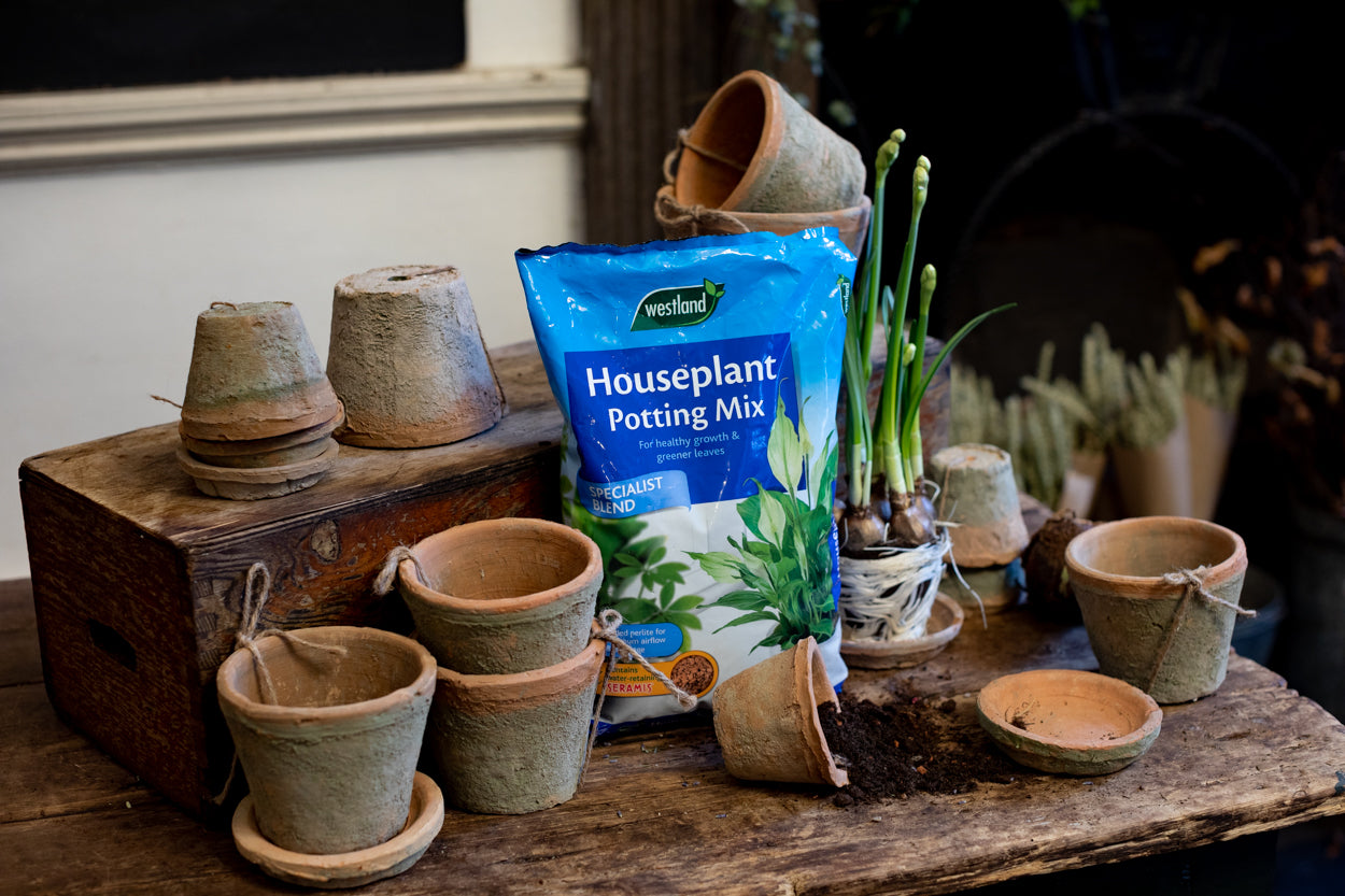 Houseplant Potting Mix