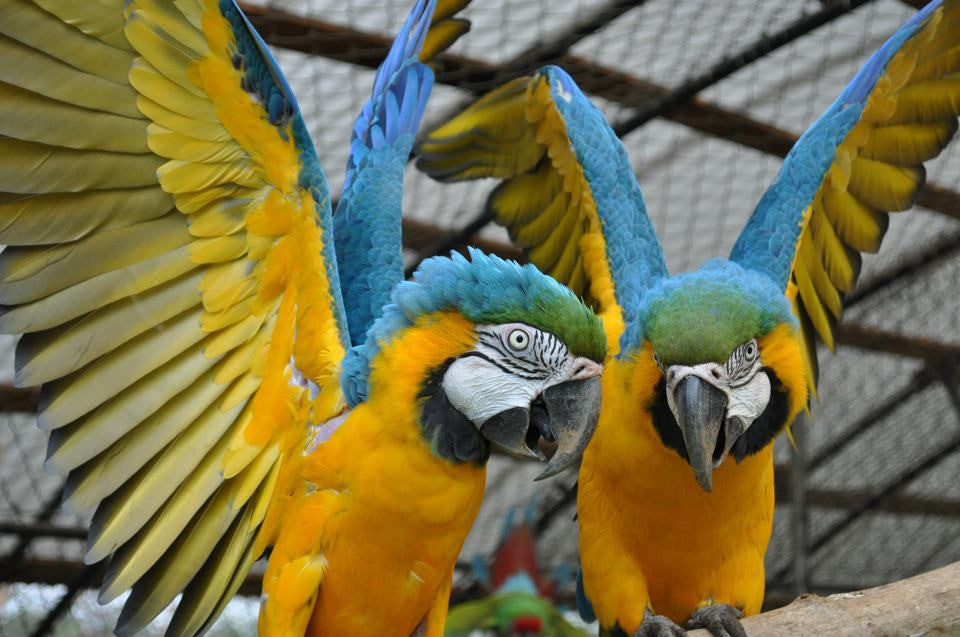 SPONSOR OUR PARROTS FOR A DAY OR WEEK