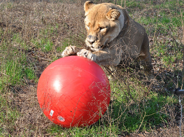 BUY AN INDESTRUCTIBLE BALL FOR OUR EXOTIC CATS