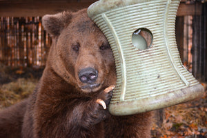 BUY A FEEDER FOR OUR BEARS