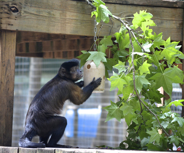 BUY A BULLET FEEDER FOR OUR PRIMATES