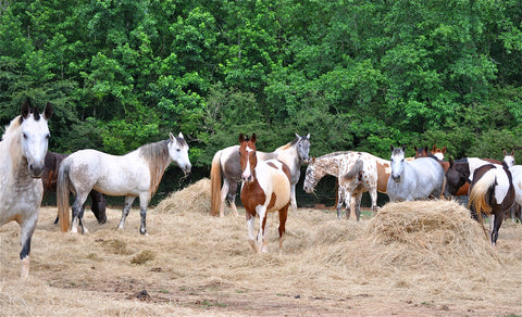 SPONSOR OUR HERD OF HORSES FOR A DAY OR WEEK