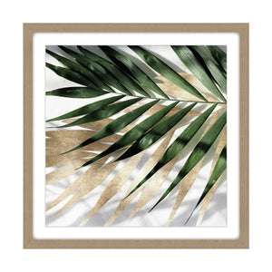Green Palm Shadow #1