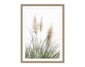 Pampus Grass #1