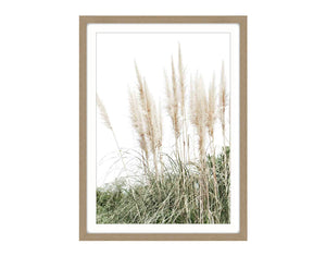 Pampus Grass #2