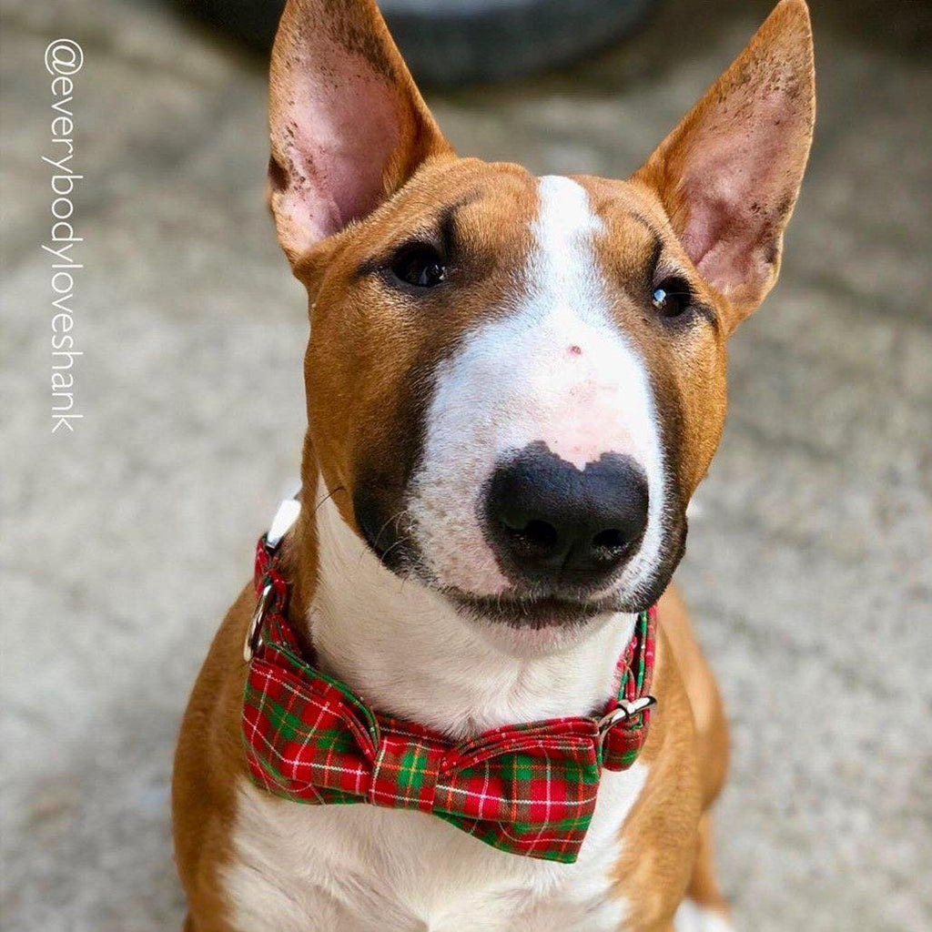 London Bow Tie Collar-Boopdogwear-Boopdogwear