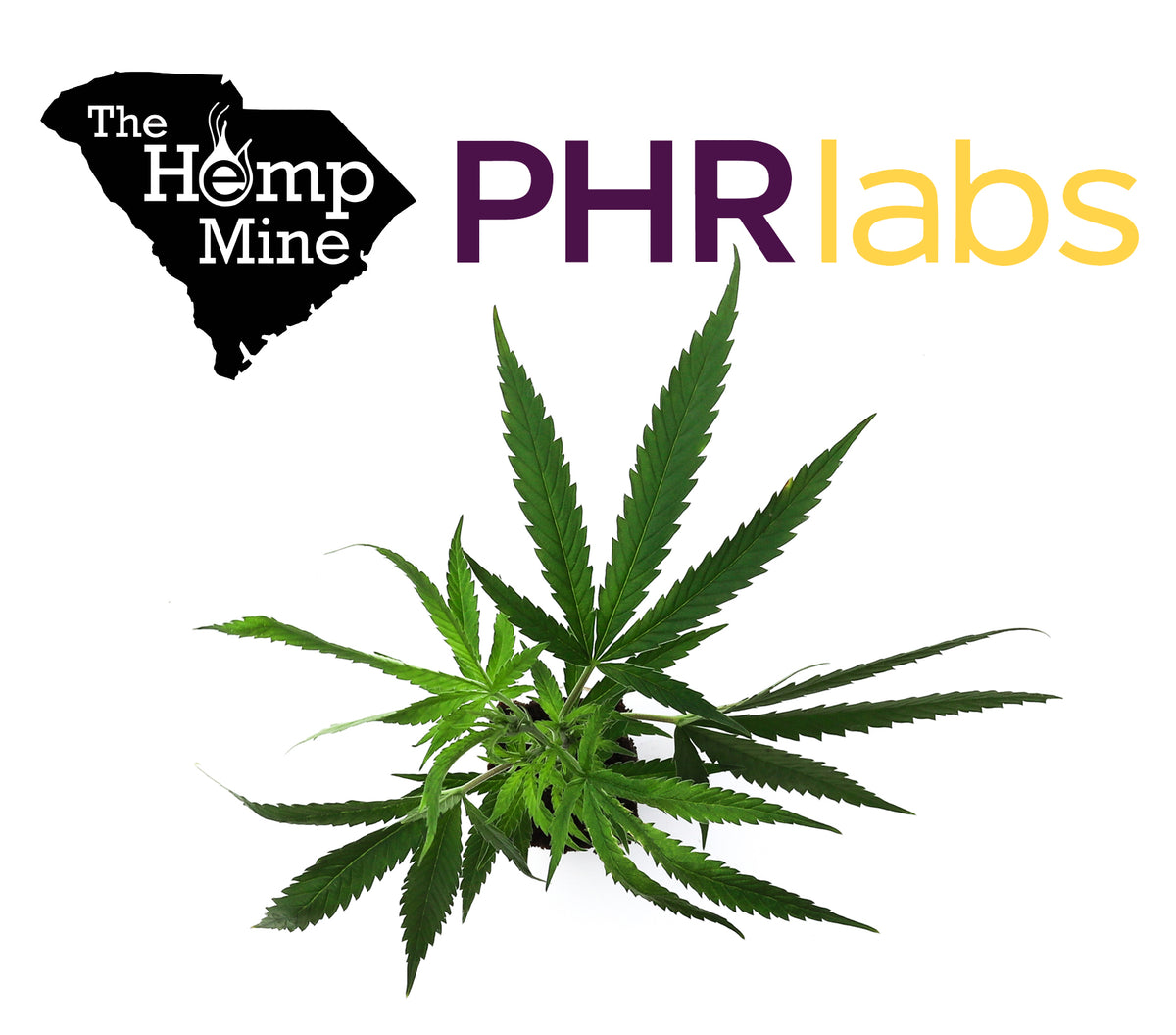 The Hemp Mine and PHR Labs Create a Unique Partnership