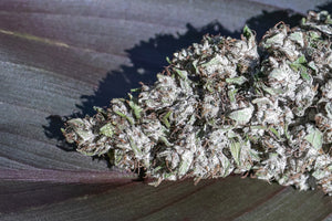 close up of hemp bud CBG Janet's G white frost