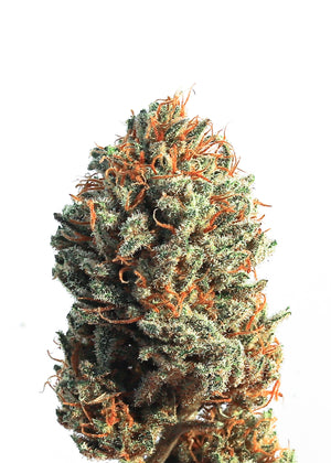 LIMITED RELEASE!  Premium Indoor Hemp Flower CRAZY CAT