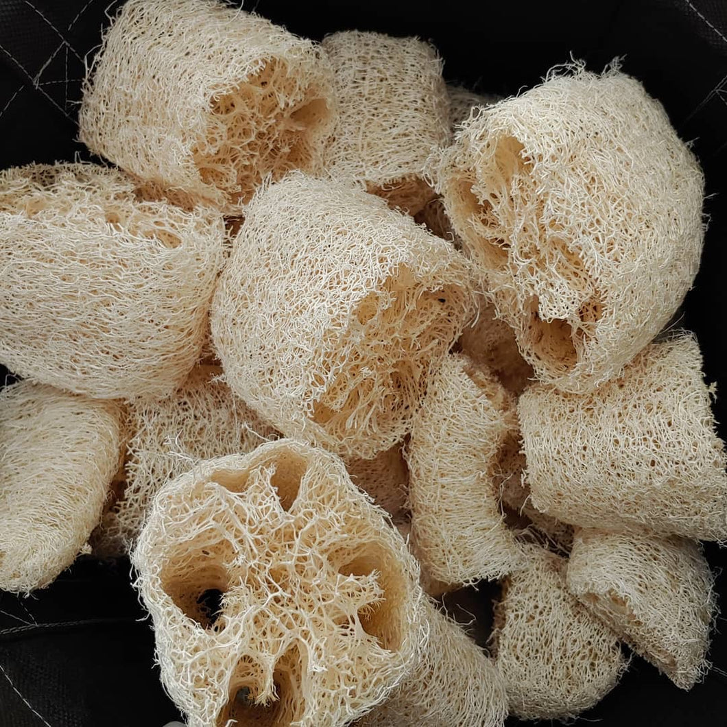 Dried Luffa - Large Pack