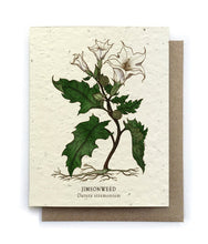 Load image into Gallery viewer, The Bower Studio - Jimson Weed Botanical Greeting Cards - Plantable Seed Paper