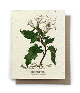 The Bower Studio - Jimson Weed Botanical Greeting Cards - Plantable Seed Paper