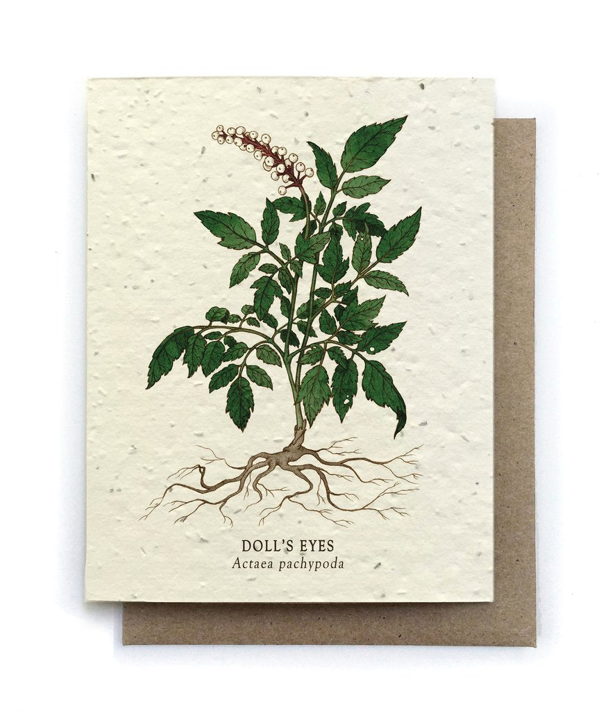 The Bower Studio - Doll's Eyes Botanical Greeting Cards - Plantable Seed Paper