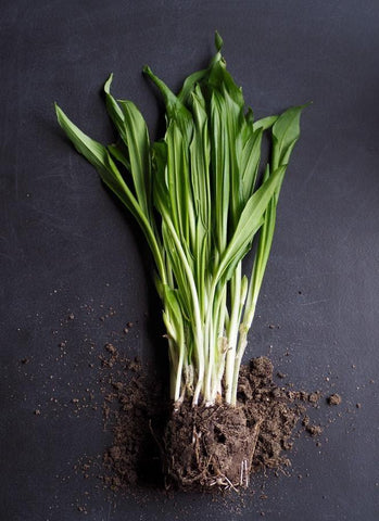 Spring Onion packet