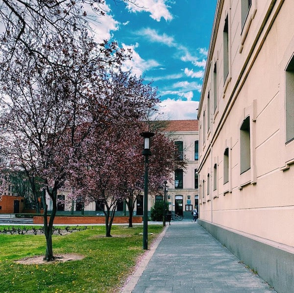 Cherry Blossom Trees on Campus   One Year Ago Today: My Life in Spain   Julieta