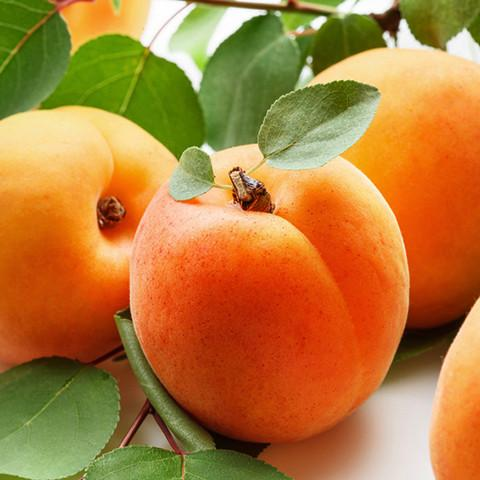 Apricot Mythology