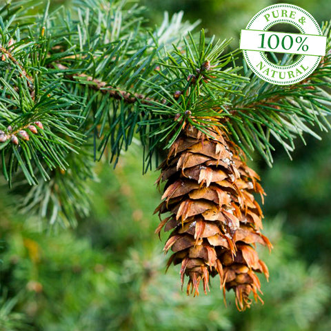 Douglas Fir Essential Oil