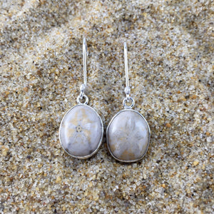 Drop Earrings Fossilized Sand Dollar-Jenstones Jewelry