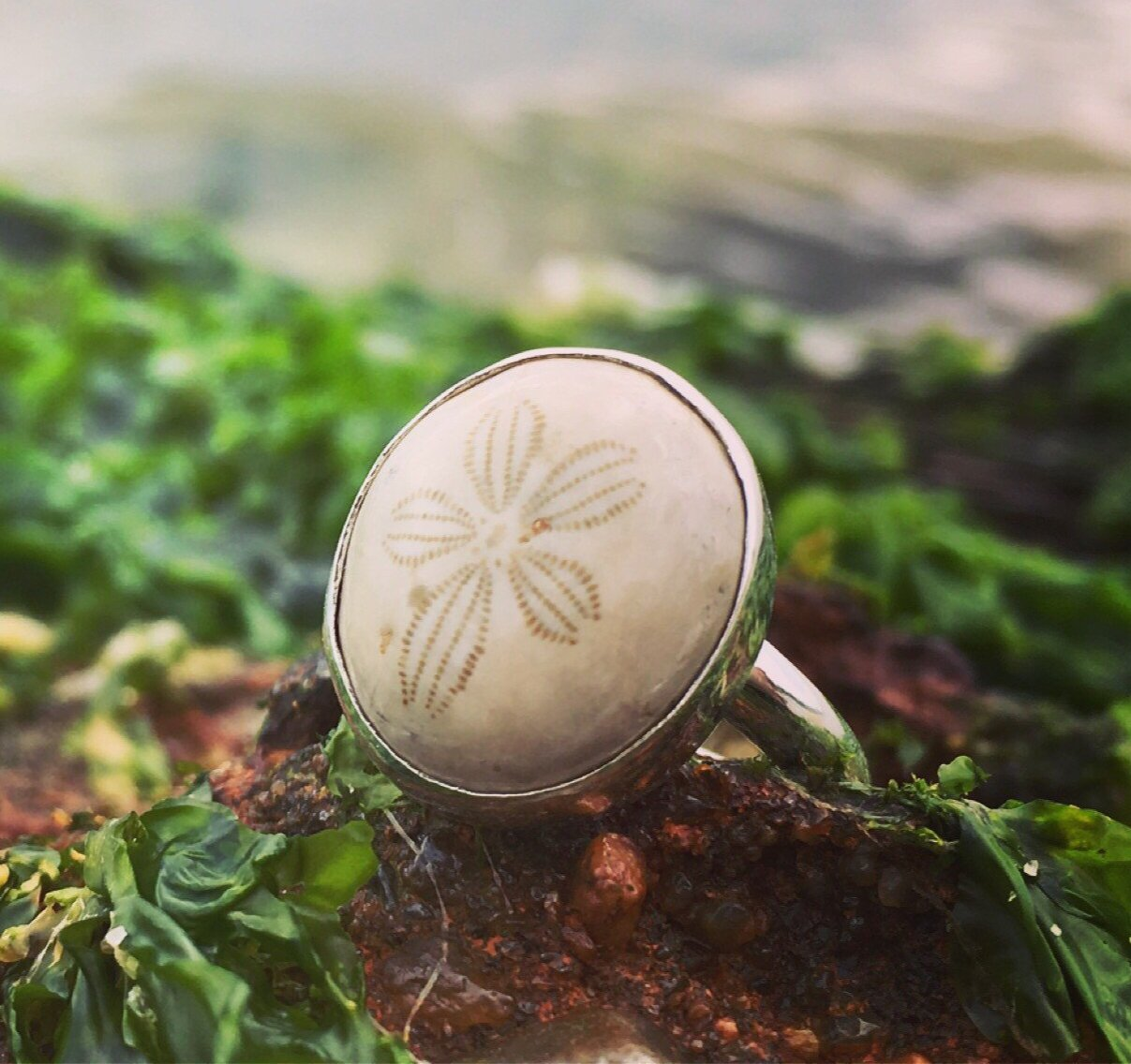Fossilized Sand Dollar Ring-Jenstones Jewelry