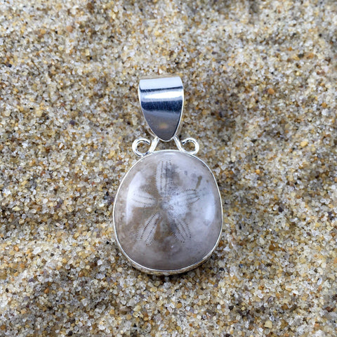 Pendant Fossilized Sand Dollar