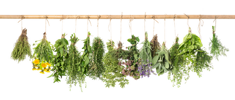 Herbs are hanging to dry on a wooden pole against a pure white background.
