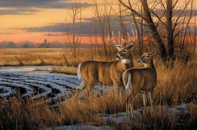 Wildlife Artwork