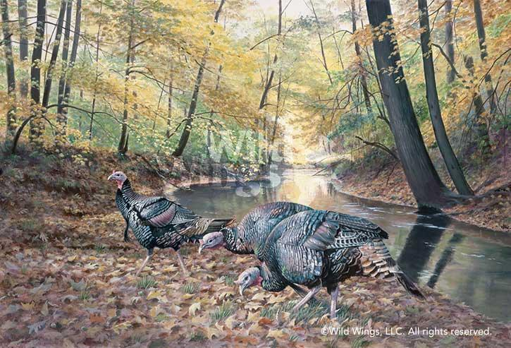 Acorn Hunters-Turkeys Art Collection