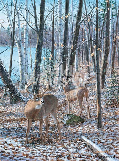 Seasons of the Woods-Courtship Art Collection