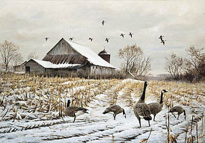 <i>Country&mdash;Canada Geese</i>