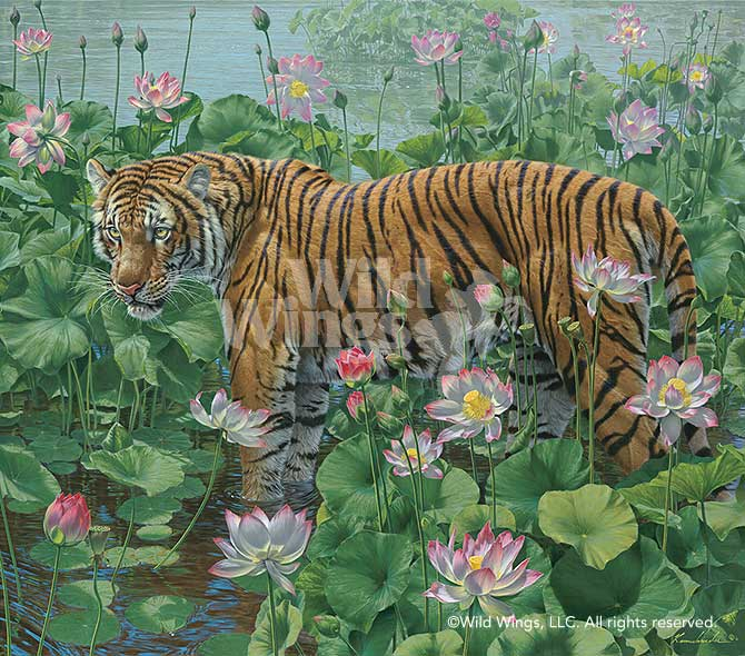 Lotus Position-Tiger Art Collection