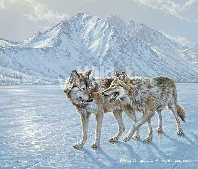 Pairs Skating—Wolves.