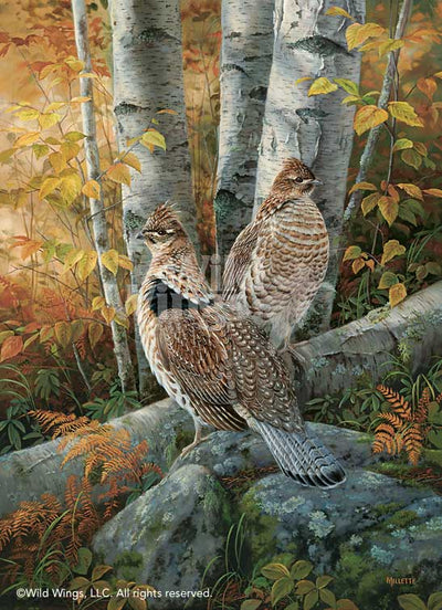 Late Season Solitude-Ruffed Grouse Art Collection