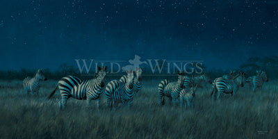 Midnight on the Serengeti—Zebras.