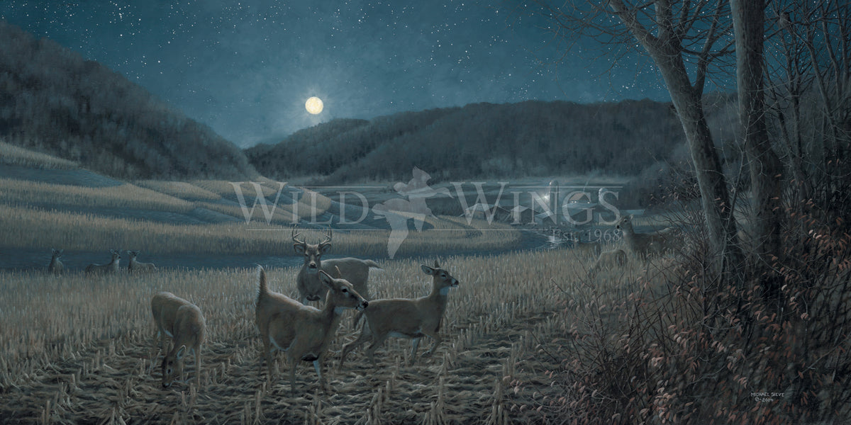 Night Moves—Whitetail Deer.
