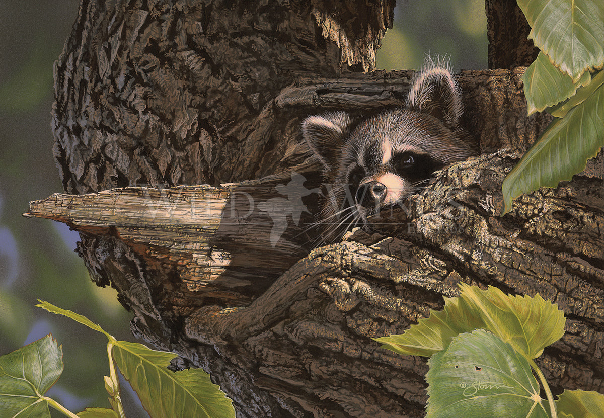 <i>Hiding Place &mdash;Raccoon</i>