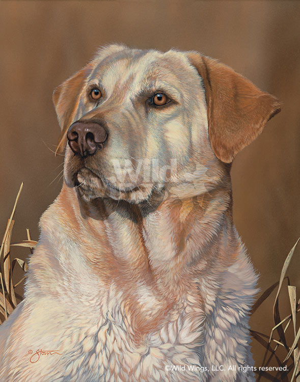 <i>Loyal Companion&mdash;Yellow Lab</i>