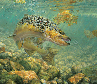 <i>Duped&mdash;Brown Trout</i>