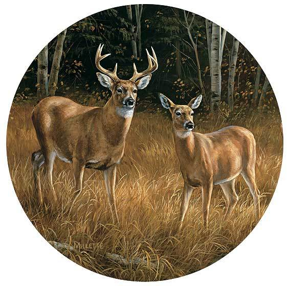 Whitetail Deer Coasters