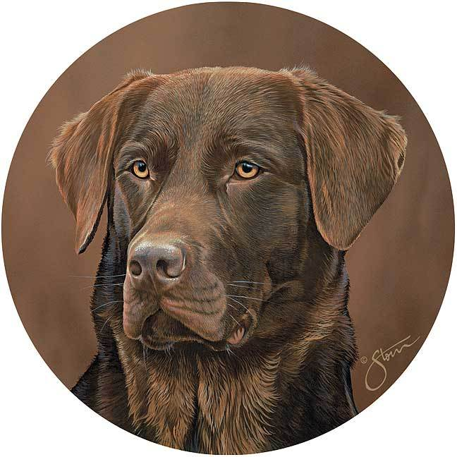 Chocolate Lab.