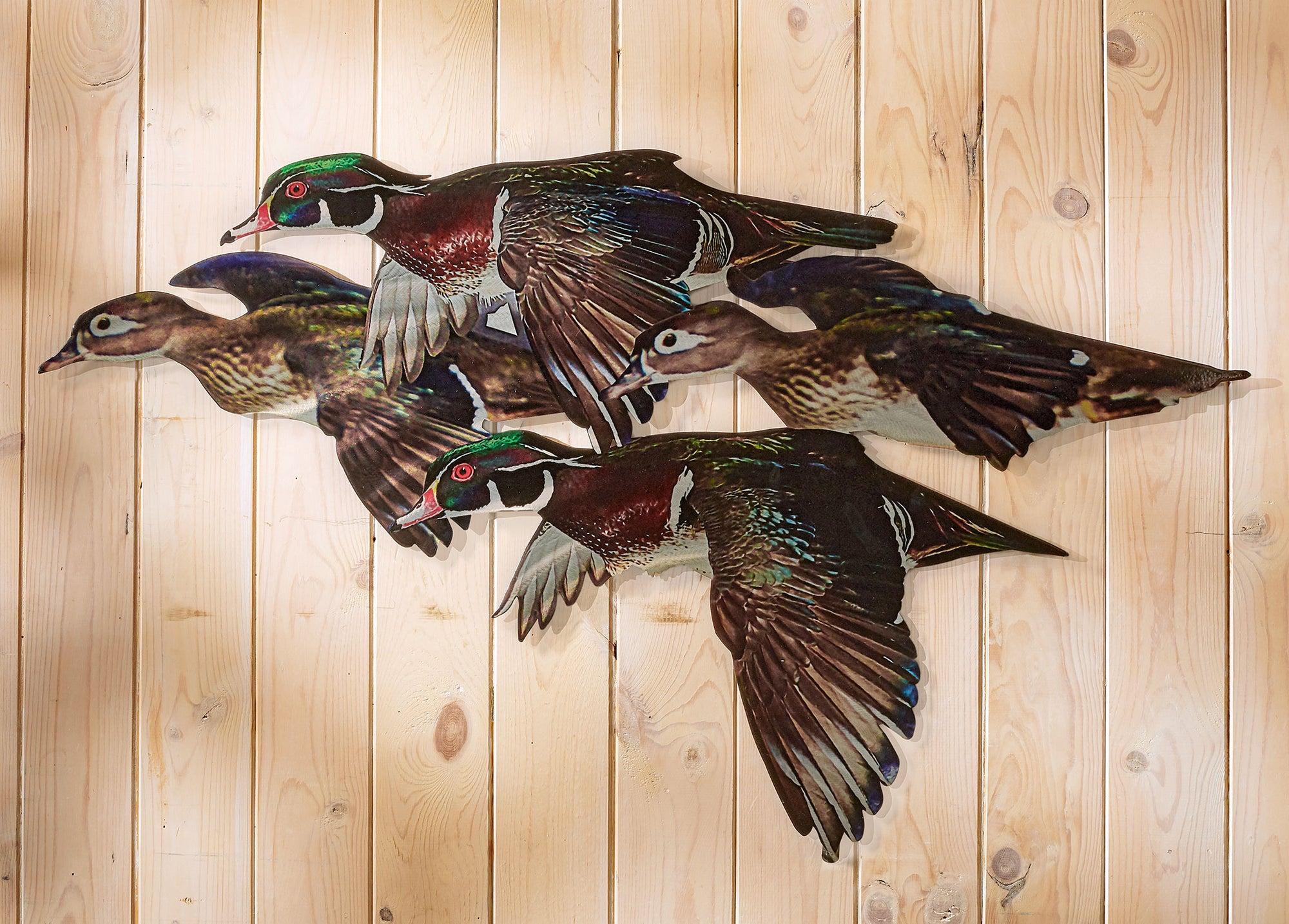 Wood Duck Flock